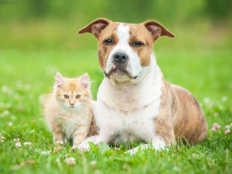 Kitten with terrier