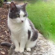 Owen_cat